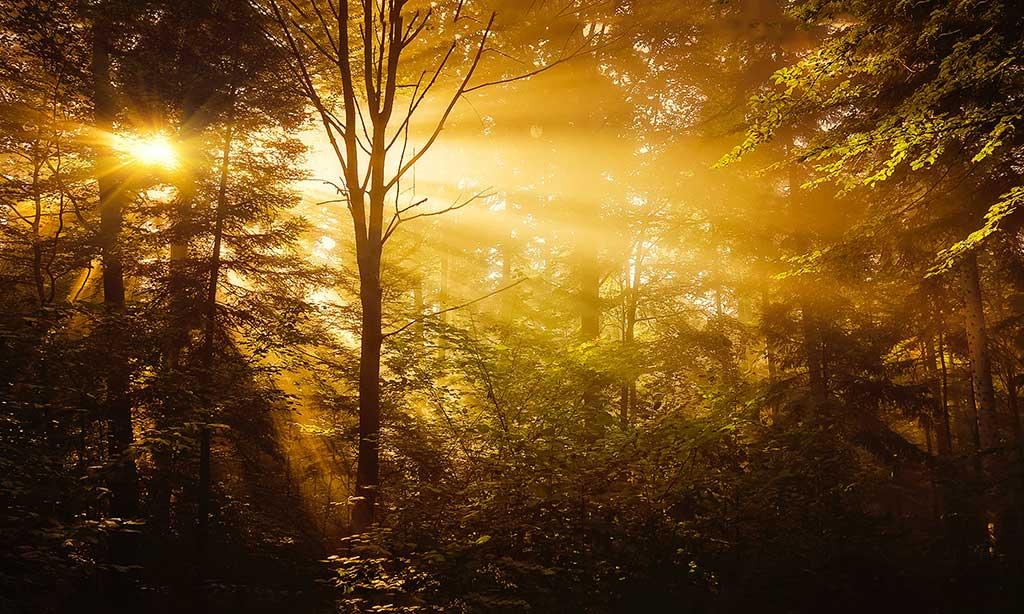 Wykorzystujcie wiedzę duchową – Bóg, Miłość i Światło w Jedni