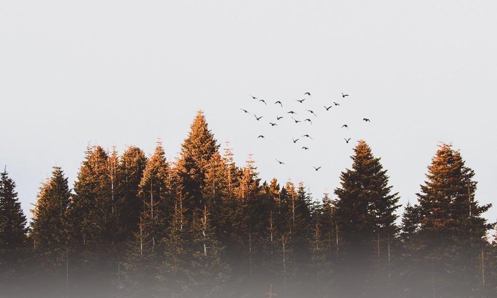 Źródlane obcowanie – Ewa Bednarczyk